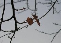葉もまばらに…