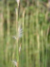 mericen-karukaya01