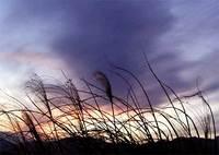 すすき野原の夕焼け